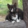 1匹でも構いません!生後2ヶ月9匹の子猫里親募集!