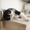 4年ぶりなの、また家猫になれるかな。(うた) サムネイル5