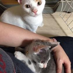 猫さん達の譲渡会