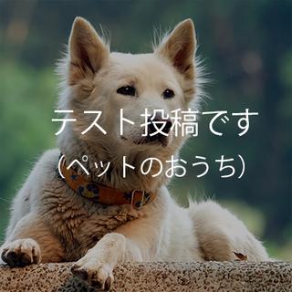 【テスト】鹿児島保護センターにて保護した柴犬・3才
