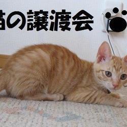 かわいい猫の譲渡会