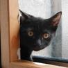 つやつやの黒子猫!人間は怖いけどおやつに釣られます