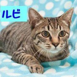 刈谷&東海市&知多 地域猫 譲渡会 サムネイル3