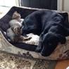 長崎県央 犬と猫の会(保護活動者)