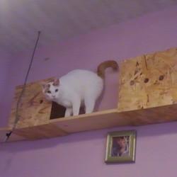 Lua猫の里親会
