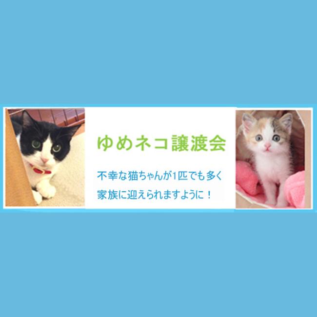 ゆめネコ譲渡会のカバー写真