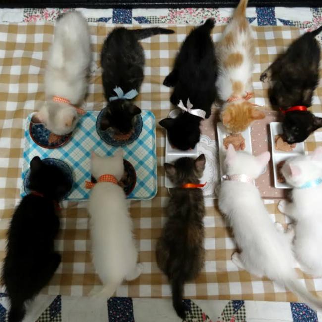 立川市地域猫ボランティアのカバー写真