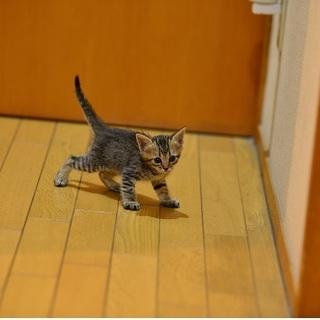 生まれたての子猫です