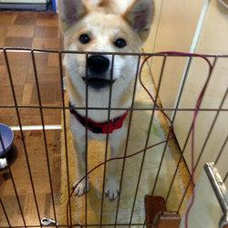 「しっぽのおうちさがし」保護犬譲渡会