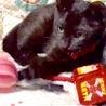 元気で人懐っこい黒子猫女の子