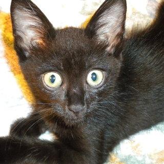 ぴかぴかの黒ネコちゃん