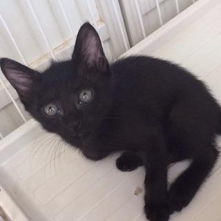 甘えんぼの黒猫ちゃん