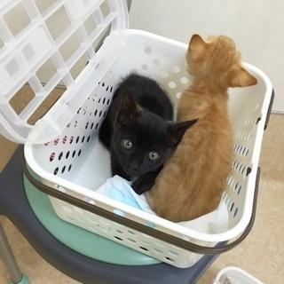 可愛い黒猫の里親さん募集をしております。