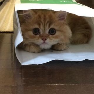 飼育放棄された猫