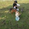 Adopt Animals and Save Life