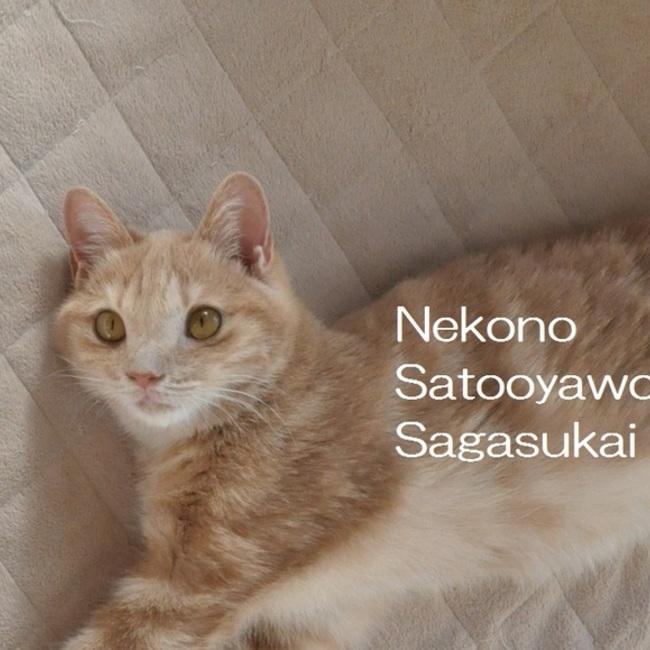 猫の里親をさがす会のカバー写真
