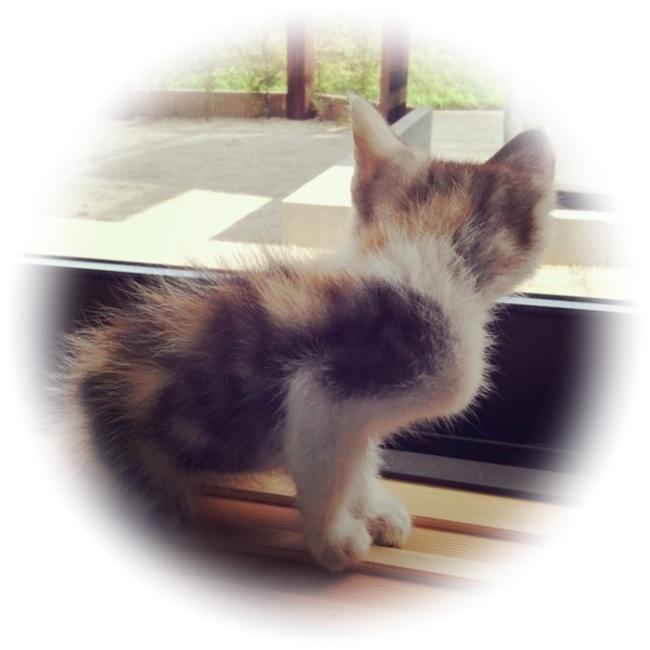 猫子堂@梅ママのカバー写真