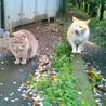 猫と暮らそう~里親募集