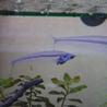 カージナルテトラなど複数種類の熱帯魚 サムネイル2