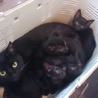 黒猫の親子5匹兄弟
