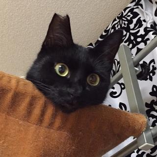 人なつこい黒猫のツキちゃん