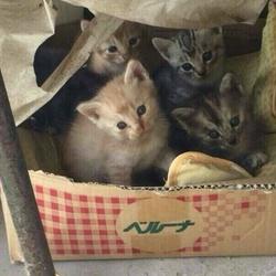 保護ネコ譲渡会&相談会
