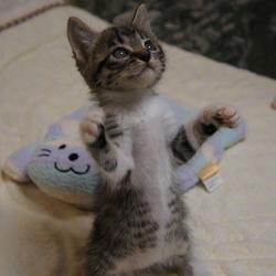 猫の里親探しミュウの会 相模原