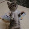 猫の里親探し ミュウの会 相模原(保護活動者)