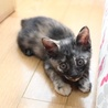 1.5か月仔猫 きいちゃん サムネイル2