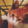 子猫の両国 サムネイル3