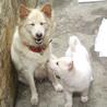 ふわふわでかなり小柄な中型犬 茜ちゃん サムネイル6