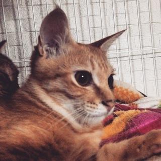 子猫の涼真(りょうま)
