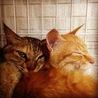 子猫の涼真(りょうま) サムネイル2