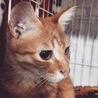 子猫の涼真(りょうま) サムネイル3
