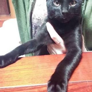 甘えん坊な黒猫の男の子です
