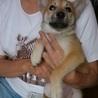 2か月の子犬の姉妹 れもんちゃん サムネイル2