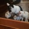 東京の浮き島に現れた子猫