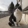4年ぶりなの、また家猫になれるかな。(うた) サムネイル4