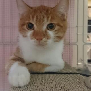 ちょっとだけ引っ込み思案な遊び好き茶白子猫!