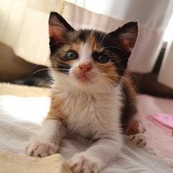 愛知県あま市でネコの譲渡会 ☆ねこネットあま☆
