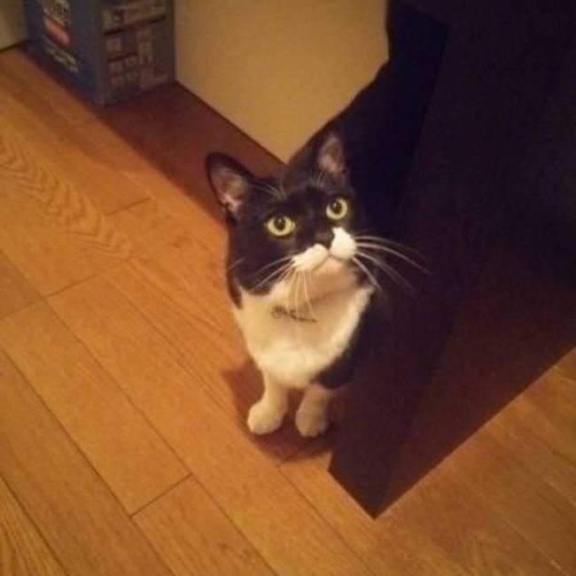 白黒猫のみかんのカバー写真