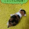 三毛姫ビーちゃん/8月中旬生の3baby  サムネイル2