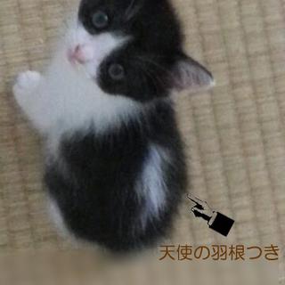 みそっかす花ちゃん /2ヶ月