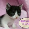みそっかす花ちゃん /2ヶ月 サムネイル4