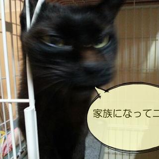 愛を招く黒ちゃん/エイズキャリア2才