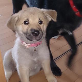 なつっこい!!可愛い子犬♡2カ月!!