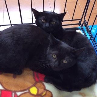 カルメン&ミカエラ.幸福を呼ぶ黒猫シスターちゃん♪