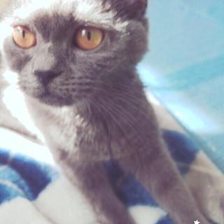とても人懐こいおっとりした可愛い猫ちゃんです!