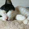 心優しい保母猫⭐︎つぶちゃん⭐︎ サムネイル3