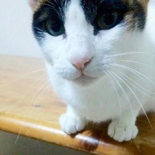 おしゃべりな三毛猫 むぅちゃん(一時停止)